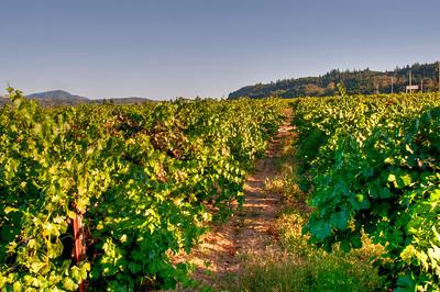 wine-grape-vineyard