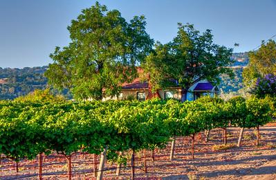 vineyard-home