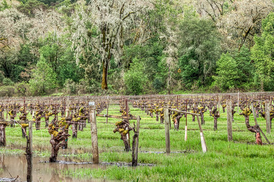 california-winter-wine-vineyard-2-2