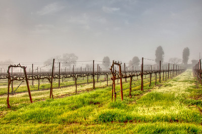 california-winter-wine-vineyard