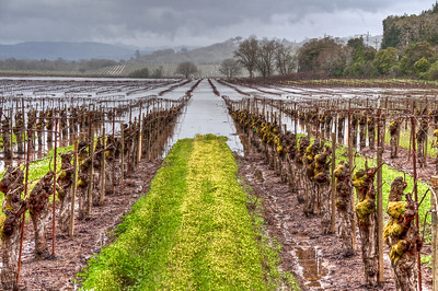 california-winter-wine-vineyard-hdr