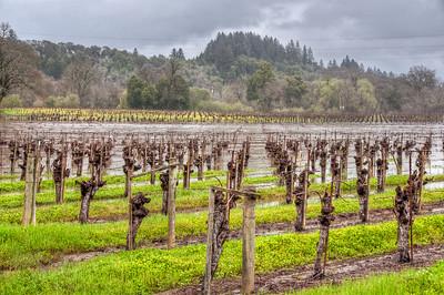 california-wine-vineyard-3