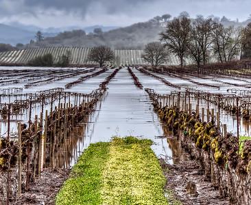 flooded-winter-vineyard