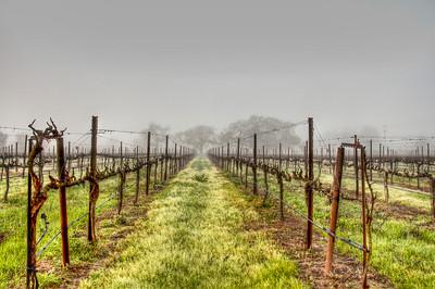 foggy-winter-vineyard-2