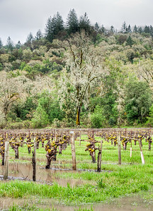 california-winter-wine-vineyard-2