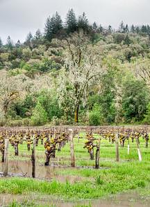 california-winter-wine-vineyard-2