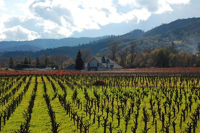california-wine-vineyard