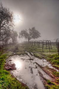 foggy-winter-vineyard-4