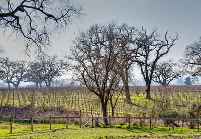 winter-vineyard2