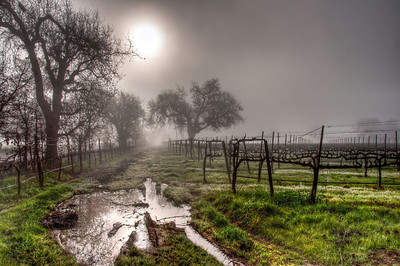 foggy-winter-vineyard-3