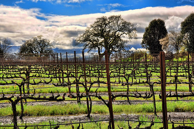 california-wine-vineyard-2