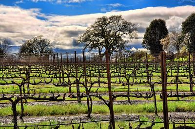 california-wine-vineyard-2