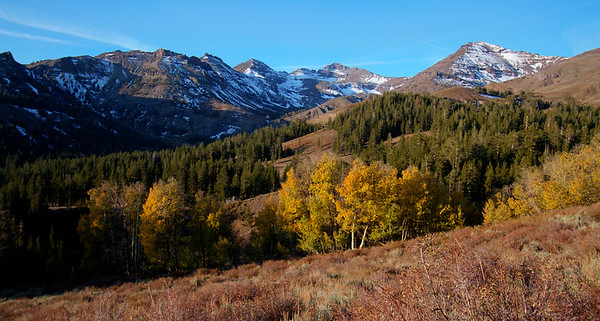 View near Sonora Pass