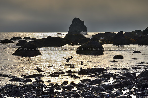 oregon-beach_5438