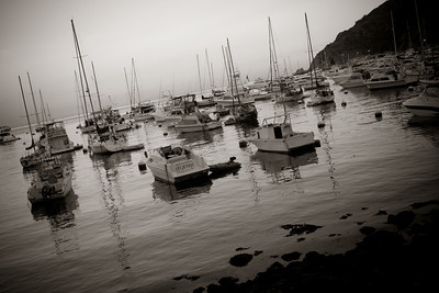 boats in the avalon harbor