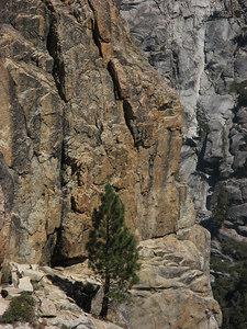 Lone tree on the rocks