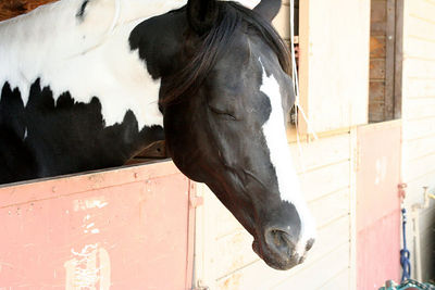 horse in his stall