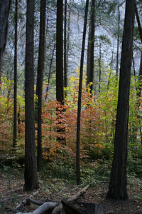 Fall Leaves in the Woods