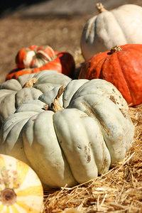 Pumpkins at a Winery