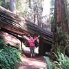 Hiking path in the Prairie Creek Redwoods