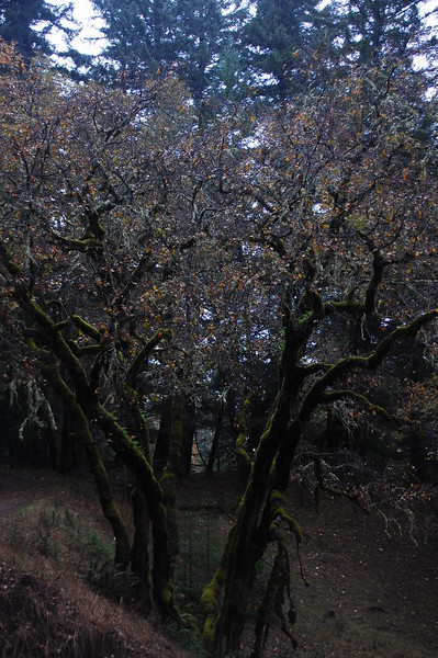 These crazy trees are all over, moss covered and kind of horror-movieish