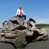Weird driftwood rock thing on Clam Beach, Loleta, CA.