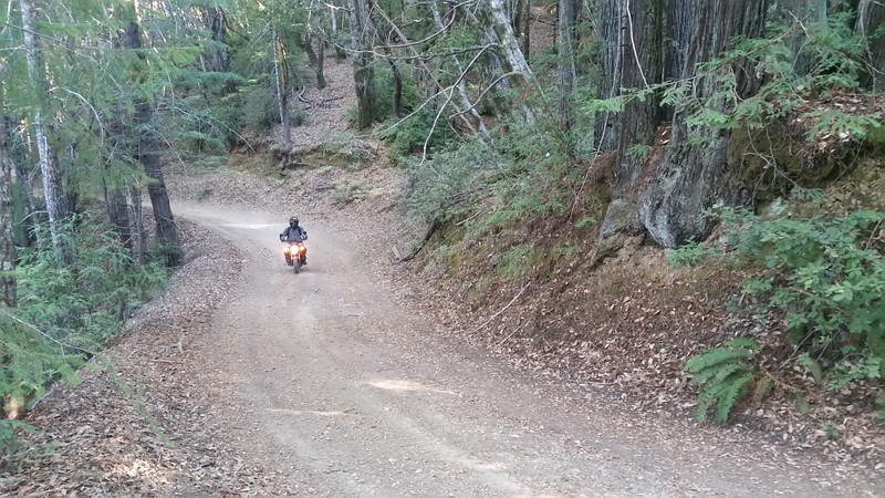 Mike riding the tiny Honda Grom on Usal Road