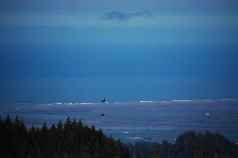 View of the ocean, beach, surf crashing on the beach... high above Ferndale.