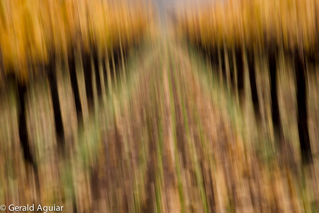 One of the instructors, Elizabeth Carmel, had several of us try to get a different view of the vineyard by introducing motion.  We set our cameras to manual mode, used a shutter speed of 1/30'th of a second while on burst mode, and then took 10 to 15 rapid exposures while rotating and moving the camera.  This was one of the only ones that worked for me.