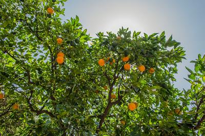 Caltech: Orange Walk