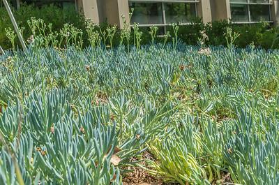 Caltech: Succulent Garden