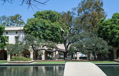 Caltech: Old Oak at Millikan Pond