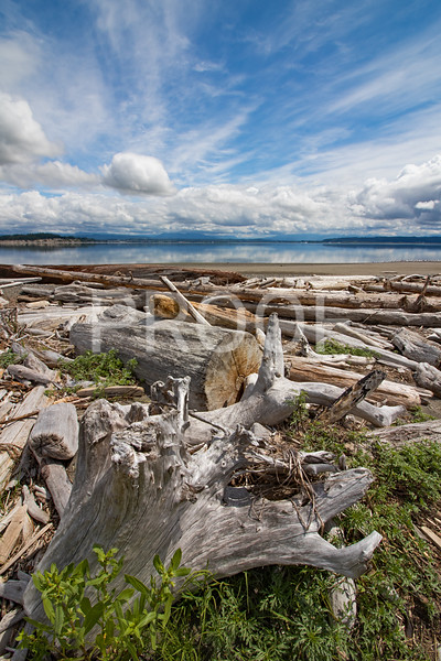 Piled driftwood in Camano Island