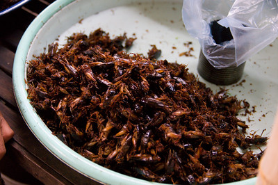 crickets, actually had some of these.  They are not bad at all, like a crispy french fry, and you've got to love the protein to calorie ratio.