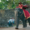 Elephant rides, anyone?
