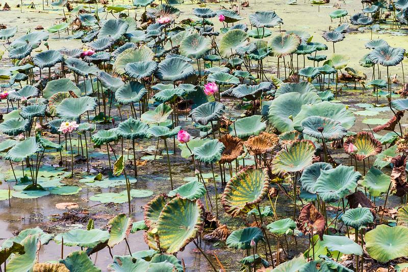 Angkor Wat - Northern Reflection Pond