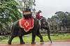 Elephant-ride,-Bayon-Temple,-Angkor-Thom,-Siem-Reap,-Cambodia