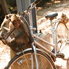 Monkey Business. Siem Reap, Cambodia