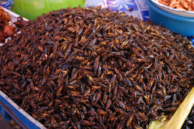 We also wanted to try these crickets.