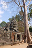A tree rooted in Banteay Kdei Temple