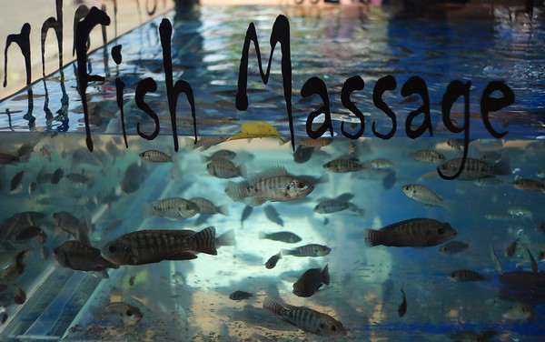 Fish massage in Phnom Penh