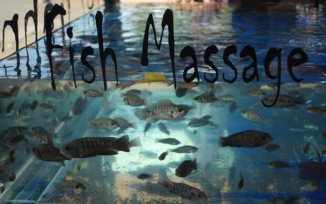 Doctor fish foot pedicure in Siem Reap, Cambodia
