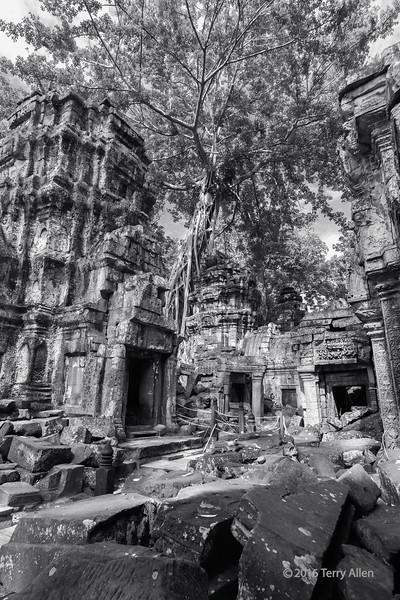 Inner-courtyard,-Ta-Prohm,-vertical-BW,-Angkor-Thom,-Cambodia