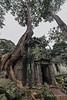 Strangler-fig-growing-over-doorway,-Ta-Prohm-Temple,-Ankkor-Wat,-Cambodia