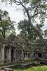 West-side-of-Ta-Prohm-with-the-famous-large-thitpok-tree-seen-from-the-back,-Angkor-Thom,-Cambodia