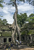 Tourists-inside-the-West-Gate-of-Ta-Prohm-at-the-large-thitpok-(Tetrameles-nudiflora)-tree,-Angkor-Thom,-Cambodia