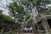 Visitors-with-famous-strangler-fig,-Ta-Prohm-temple,-Angkor-Thom,-Cambodia