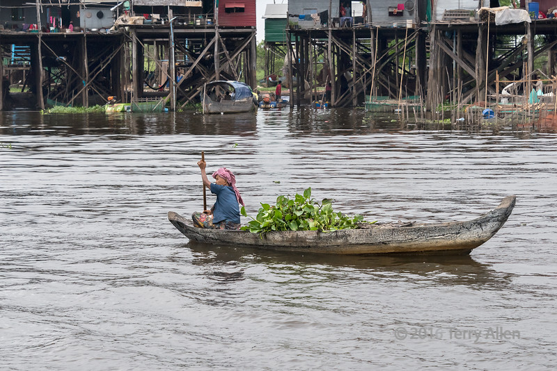 Woman-paddling-dugout-canoe-with-a-load-of-water-hyacinths-past-Kampong-Phluck-stilt-village,-Tahas-River,-Tonle-Sap,-Cambodia