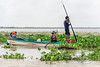 Man-and-woman-fishing-in-the-water-hyacinths,-monsoon-season,-Tonle-Sap,-Cambodia