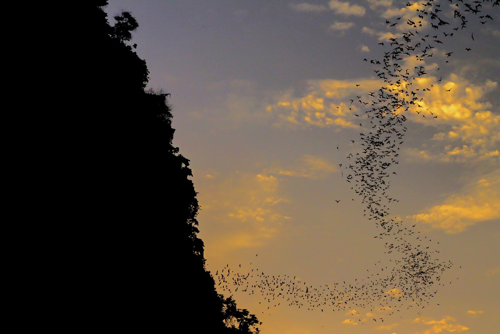 Bat Show at the Bat Cave in Cambodia